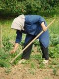 Het landbouw werk Stock Foto