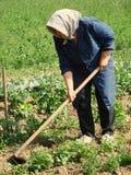 Het landbouw werk Royalty-vrije Stock Foto's