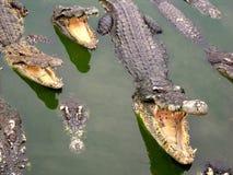 Het Landbouwbedrijf en de Dierentuin van de Krokodil van Samutprakan stock fotografie