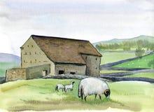 Het landbouwbedrijf en de schapen van Yorkshire met twee lammeren bij de weide, Engeland Waterverfhand getrokken landschap vector illustratie