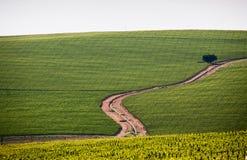 Het landbouwbedrijf Kaapstad Zuid-Afrika van de wijngaardwijn royalty-vrije stock fotografie