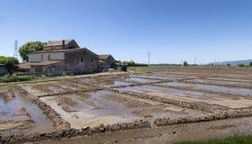 Het landbouwbedrijf, Landbouwgebied gaf vers zonnige dag water - Beeld stock afbeelding