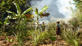 Het landbouwbedrijf-leven Royalty-vrije Stock Foto's