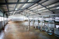 Het landbouwbedrijf melkend systeem van de koe stock foto's