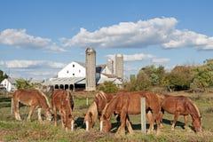 Het Landbouwbedrijf van Amish van de Provincie van Lancaster Stock Foto's