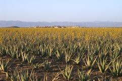 Het landbouwbedrijf van Arovera Royalty-vrije Stock Foto's