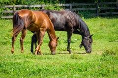 Het Landbouwbedrijf van het boerderijpaard stock foto's