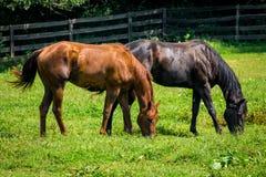 Het Landbouwbedrijf van het boerderijpaard royalty-vrije stock foto
