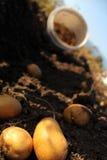 Het landbouwbedrijf van de aardappel op het gebied Royalty-vrije Stock Afbeelding