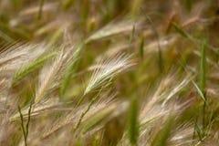 Het landbouwbedrijf van de aardinstallatie, hooilandbouwbedrijf, onduidelijk beeldachtergrond royalty-vrije stock foto