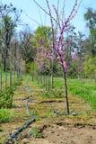 Het Landbouwbedrijf van de boom in de Lente Royalty-vrije Stock Foto's