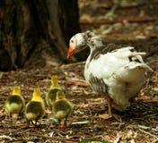 Het landbouwbedrijf van de familie Stock Foto