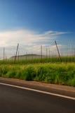 Het landbouwbedrijf van de hop stock afbeelding