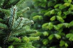 Het landbouwbedrijf van de kerstboom royalty-vrije stock afbeelding