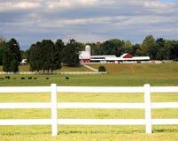 Het Landbouwbedrijf van de koe Stock Foto's
