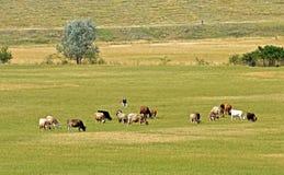 Het landbouwbedrijf van de koe Stock Afbeeldingen