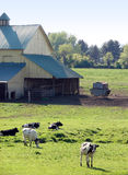 Het Landbouwbedrijf van de koe in Maryland Royalty-vrije Stock Afbeeldingen