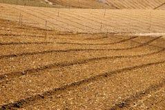 Het landbouwbedrijf van de kool na oogst royalty-vrije stock foto