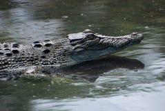 Het Landbouwbedrijf van de krokodil stock foto