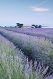 Het landbouwbedrijf van de lavendel Royalty-vrije Stock Afbeeldingen