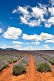 Het Landbouwbedrijf van de lavendel stock afbeeldingen