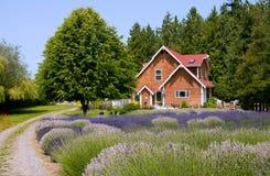 Het Landbouwbedrijf van de lavendel Stock Foto's