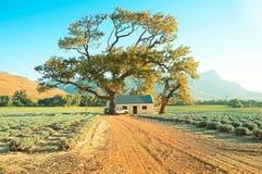 Het landbouwbedrijf van de lavendel met boom Stock Foto