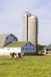 Het Landbouwbedrijf van de melk royalty-vrije stock foto