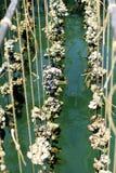 Het landbouwbedrijf van de oester Stock Foto