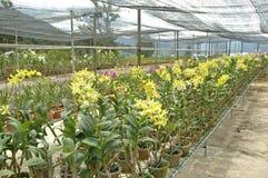 Het landbouwbedrijf van de orchidee stock foto