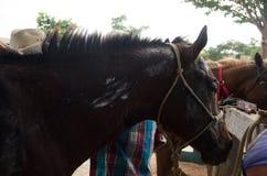 Het landbouwbedrijf van de paardcowboy Stock Afbeelding