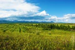 Het Landbouwbedrijf van de prairie Stock Afbeelding