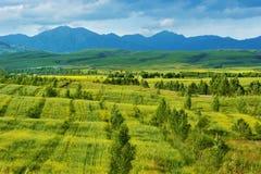 Het Landbouwbedrijf van de prairie Stock Foto