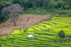 Het landbouwbedrijf van de terrasrijst in Thailand Royalty-vrije Stock Foto