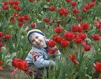 Het Landbouwbedrijf van de tulp Royalty-vrije Stock Afbeeldingen
