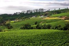 Het landbouwbedrijf van de wijn op de Westelijke de wijnroute van de Kaap Stock Afbeeldingen