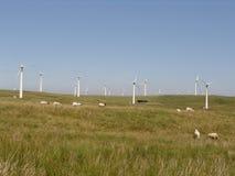 Het landbouwbedrijf van de wind met schapen in de Welse heuvels Royalty-vrije Stock Afbeeldingen