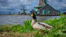 Het Landbouwbedrijf van de de Windturbine van het watermeer stock foto