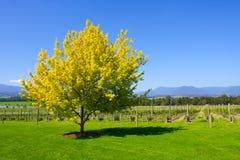 Het landbouwbedrijf van druiven Royalty-vrije Stock Fotografie