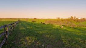 Het landbouwbedrijf van het Bluegrasspaard stock videobeelden