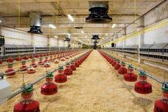 Het landbouwbedrijf van het gevogelte Royalty-vrije Stock Afbeelding