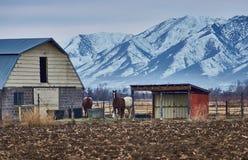 Het landbouwbedrijf van het land Stock Fotografie