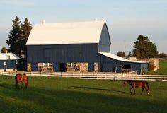 Het landbouwbedrijf van het paard Royalty-vrije Stock Afbeeldingen
