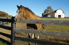 Het Landbouwbedrijf van het paard stock afbeelding