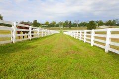 Het landbouwbedrijf van het paard Stock Afbeeldingen