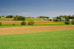 Het Landbouwbedrijf van het vee in Pennsylvania Royalty-vrije Stock Fotografie