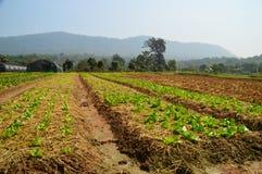 Het landbouwbedrijf van hydrocultuurgroenten Royalty-vrije Stock Fotografie