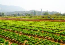Het landbouwbedrijf van hydrocultuurgroenten Royalty-vrije Stock Foto
