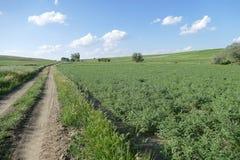 Het landbouwbedrijf van kekersturkije in het steppeklimaat, stock afbeeldingen