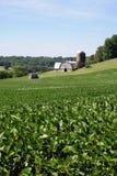 Het Landbouwbedrijf van Maryland royalty-vrije stock foto